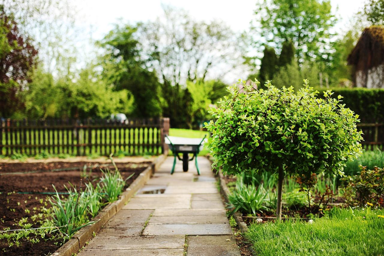 beginner's garden