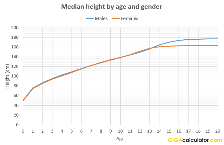 median height us citizens